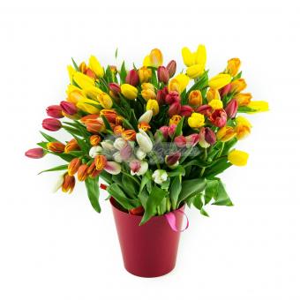 Букет из 75 Тюльпанов