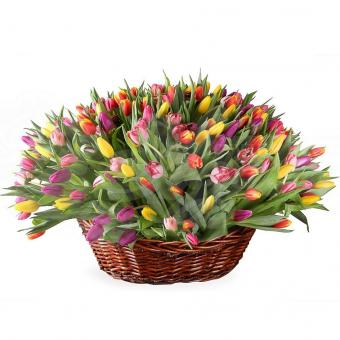 Корзина из 155 Тюльпанов